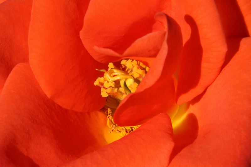 """SOFT SWIRL"" Image #9614<br /> Botanical Gardens ~ Ontario, Canada<br /> <br /> (BetterPhoto's *Editor's Pick Award*)"