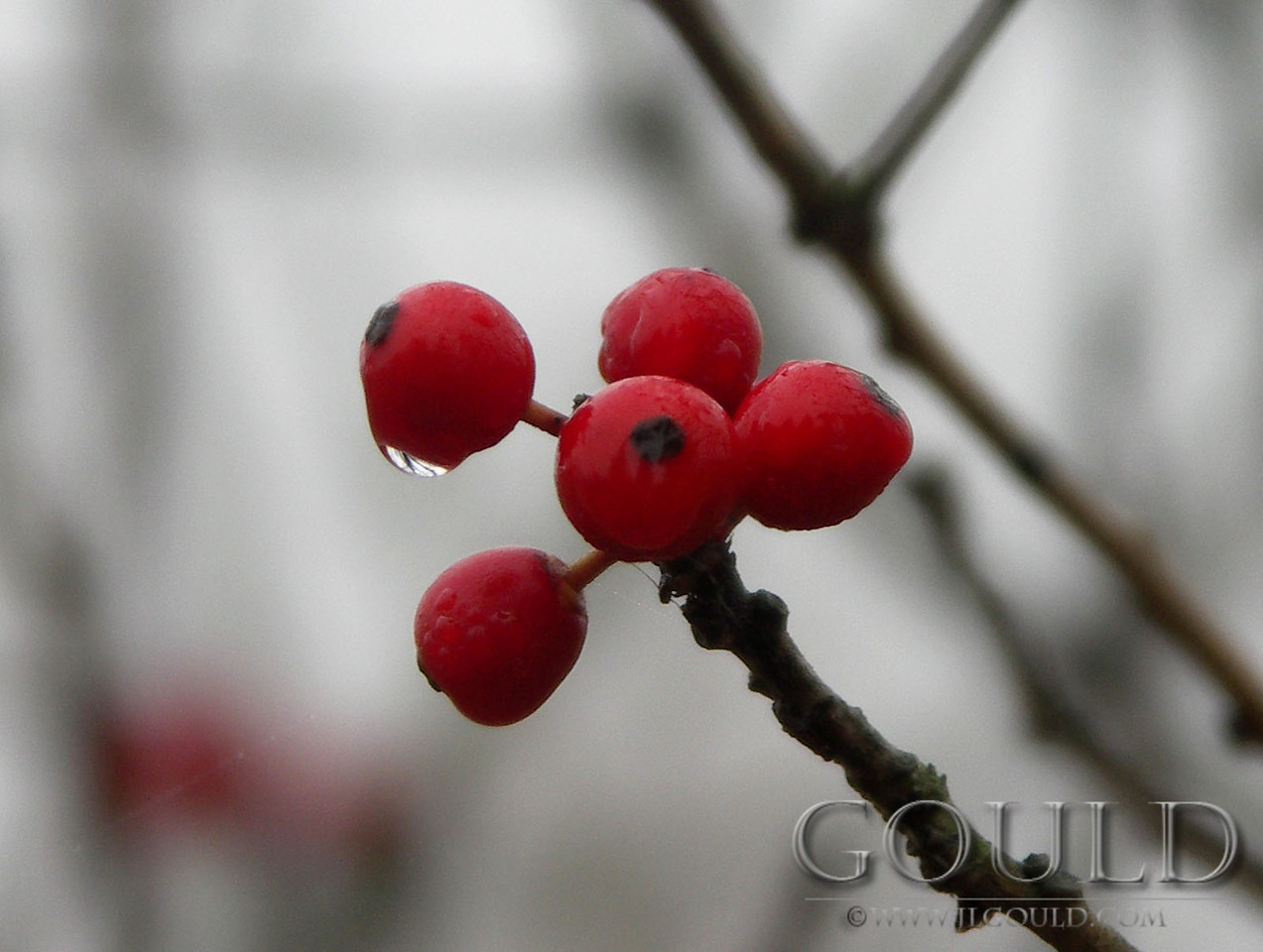 Winter's Red