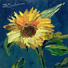 "30 in 30 Challenge Day 5: ""Sunflower"" © 2013 Susie Morrell 6x6 original oil on panel; private collection"