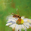 """Bee on a Daisy"" © 2013 Susie Morrell 6x6 original oil on panel; private collection"