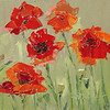 """Poppies"" ©2013 SusieMorrell 6x6  oil on panel Private Collection"