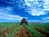 Trator Monsanto Rib Preto hoe=riz 1 scan abr08-2-alta