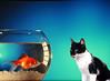 peixe 2-alta