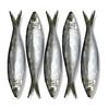 peixe 3-alta
