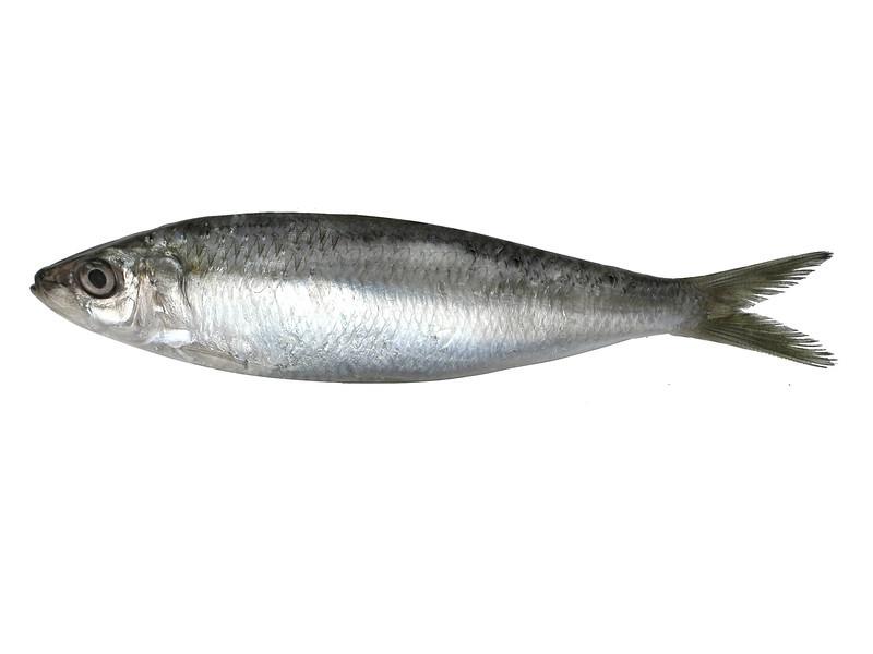 peixe2-alta