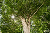20120228-BRK-7418-pau-brasil-r-manoel-da-nobrega-2500px