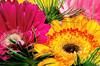 20130606-flores-8905-alta