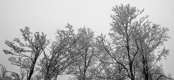 Rime Frost Panorama