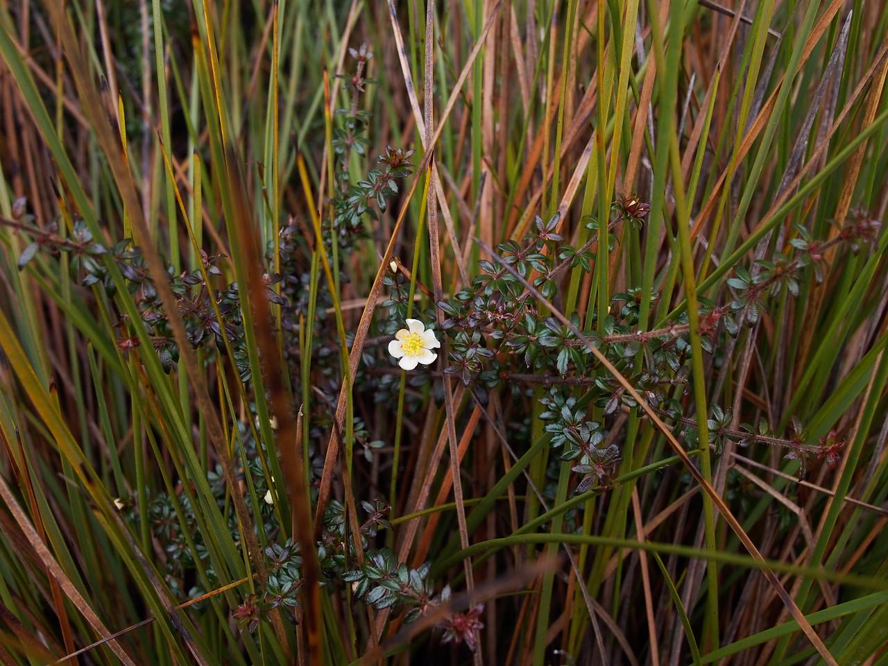 Dove Pond trail