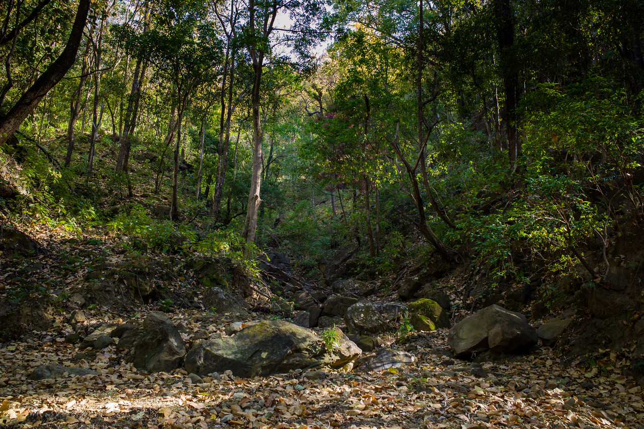 Durgadevi forest and dry stream beds