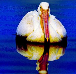 bird_Florida