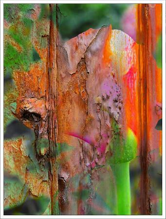 PaintedROSE