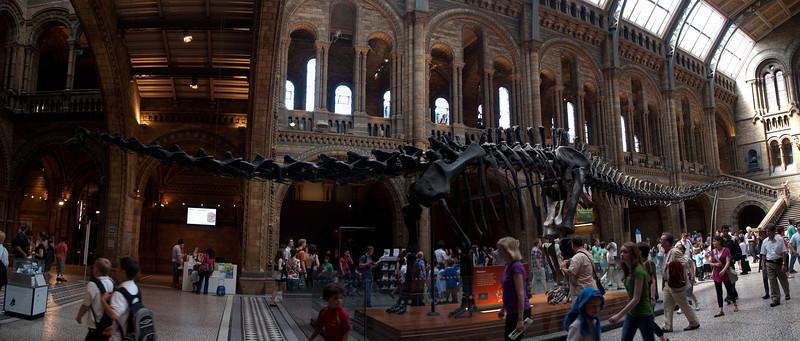 Diplodocus panorama, London, UK<br /> <br /> Olympus E-420 & Zuiko 12-60/2.8-4.0