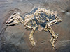 """Messel """"horse"""", Eocene"""