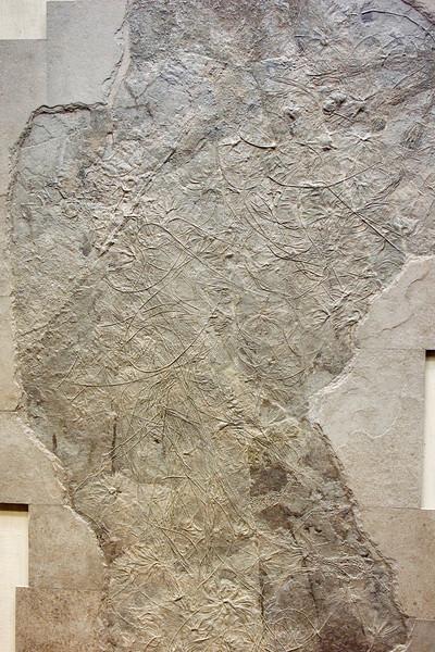 Seirocrinus, Jurassic