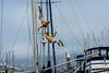 Cirque du Sail comes to Sausalito