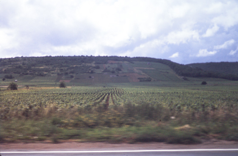 Vineyards-NE France