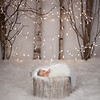 Brooke1111 1Fiscarelli Photography Winter White Birch and lights
