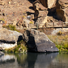 Trail along Crooked River, Smith Rock, Oregon, 2015