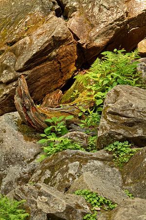 Grotto Falls area.