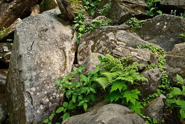 Rocks around Grotto Falls