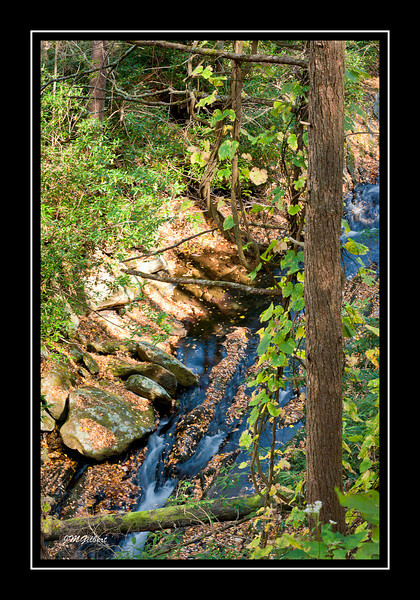 _NJG3583: Along the Chimney Top Trail the creek below us looked almost black.