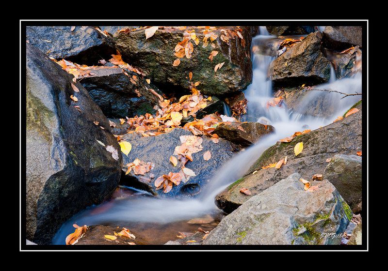 NJG3526:  another shot of the run-off water from Laurel Falls.