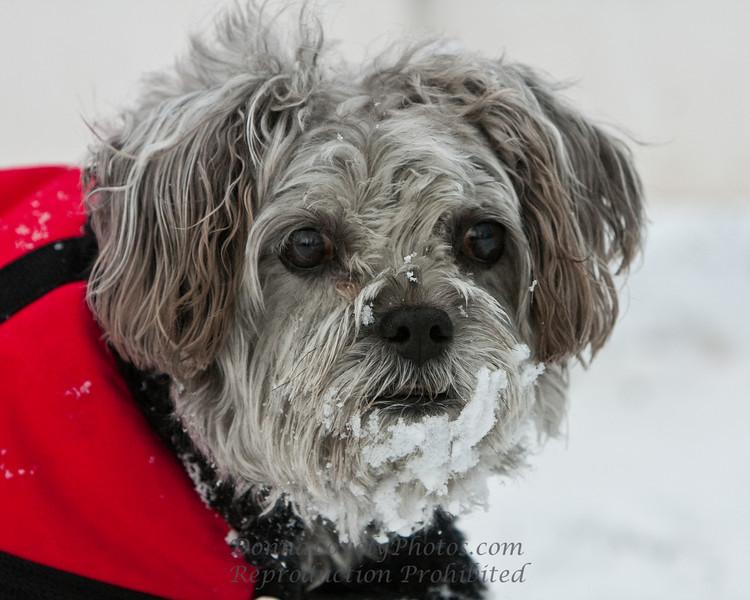 Got Snow?, Smokey the Dog