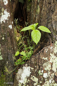 4-24-17.  Mini garden growing from a tree trunk in Cades Cove.