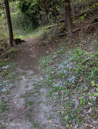 Path back up to the Lodge.  Bluets all on the sides.