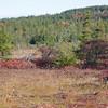 Closer Shot of the Bog