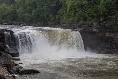 Cumberland Falls, Kentucky.  First stop.  Many of my favorite shooting places were blocked off for one reason of another, and not many wildflowers.  But the falls were roaring!