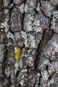 Checking the tree bark and lichens, there was one patch of bright green.