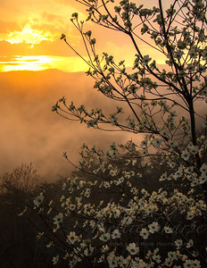 Sunset and a Dogwood after the rain. taken from Luke Mountain.. Missing Link. April 2019