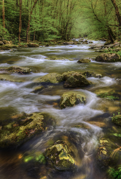 Spring at Big Creek  in the Smoky Mountains