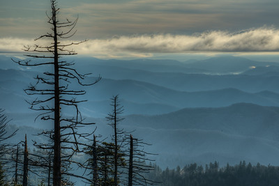 Morning at Clingman's Dome