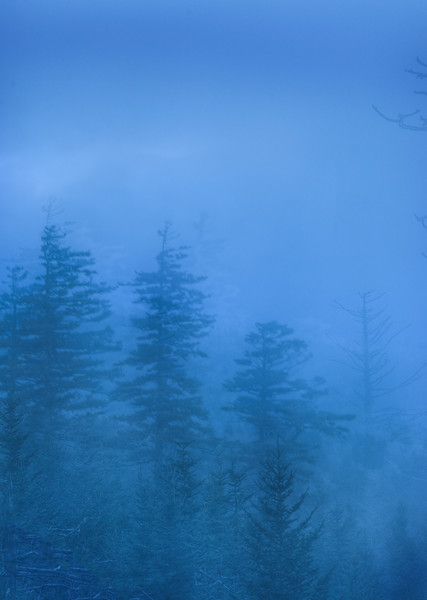 Early Morning Fog at Clingman's Dome