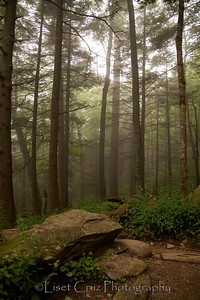 On the way to Rainbow Falls.  The Great Smoky Mountains.  North Carolina and Tennessee. United States