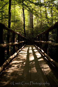A bridge in Joyce Kilmer Memorial Forest.  The Great Smoky Mountains.   North Carolina and Tennessee.  United States