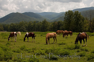 Cades Cove.  The Great Smoky Mountains.   North Carolina and Tennessee.  United States