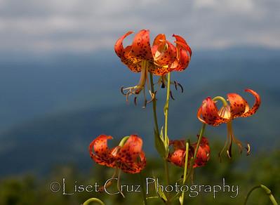 Smoky Mountains, USA.  Liset Cruz Photography.