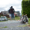 01/22/2013:<br /> Cat on a Leash tries to blend in with the sidewalk.