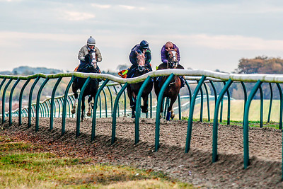 Racehorses, Newmarket