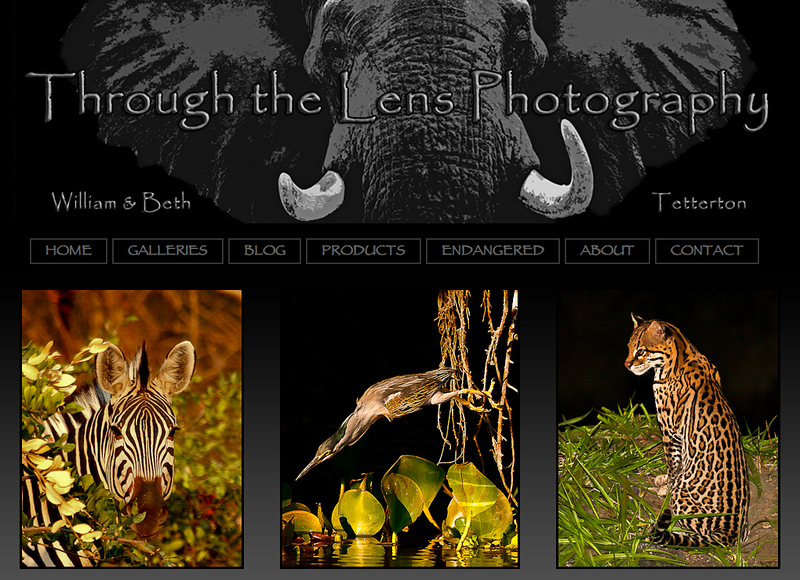 "Through the Lens Photography  – Photographer specializes in wildlife and nature photography<br><br> SmugMug Customization and Wordpress Design - By jR Customization   <p class=""ContentText""> <br><br> - Web site is at <a href= ""http://www.throughthelensnow.com/ ""target=""_blank"" onClick=""javascript: pageTracker._trackPageview('/outgoing/  http://www.throughthelensnow.com/');"">throughthelensnow.com</a><br> - Entire Web Site Hosted via Smugmug<br>  </p>"