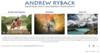 Andrew Ryback