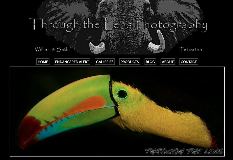 """Through the Lens Photography from South Carolina<br /> Specializes in Nature and Wildlife Photography<br /> Web Site can be found at : <a href=""""http://www.throughthelensnow.com"""">http://www.throughthelensnow.com</a><br /> SmugMug Customization by jR Customization"""