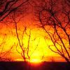 DSC_7452-Edit phoenix a
