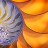 Nautilus Curves