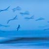 Off Shore Flock