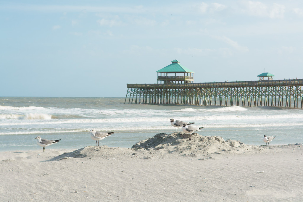 Seagulls at Folly Beach Peir
